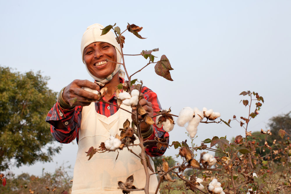 Organic_Cotton_Chetna_Organic_India_3.jpg