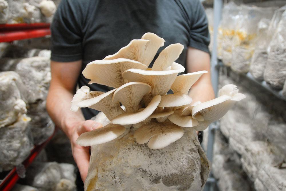 Farmed Mushrooms