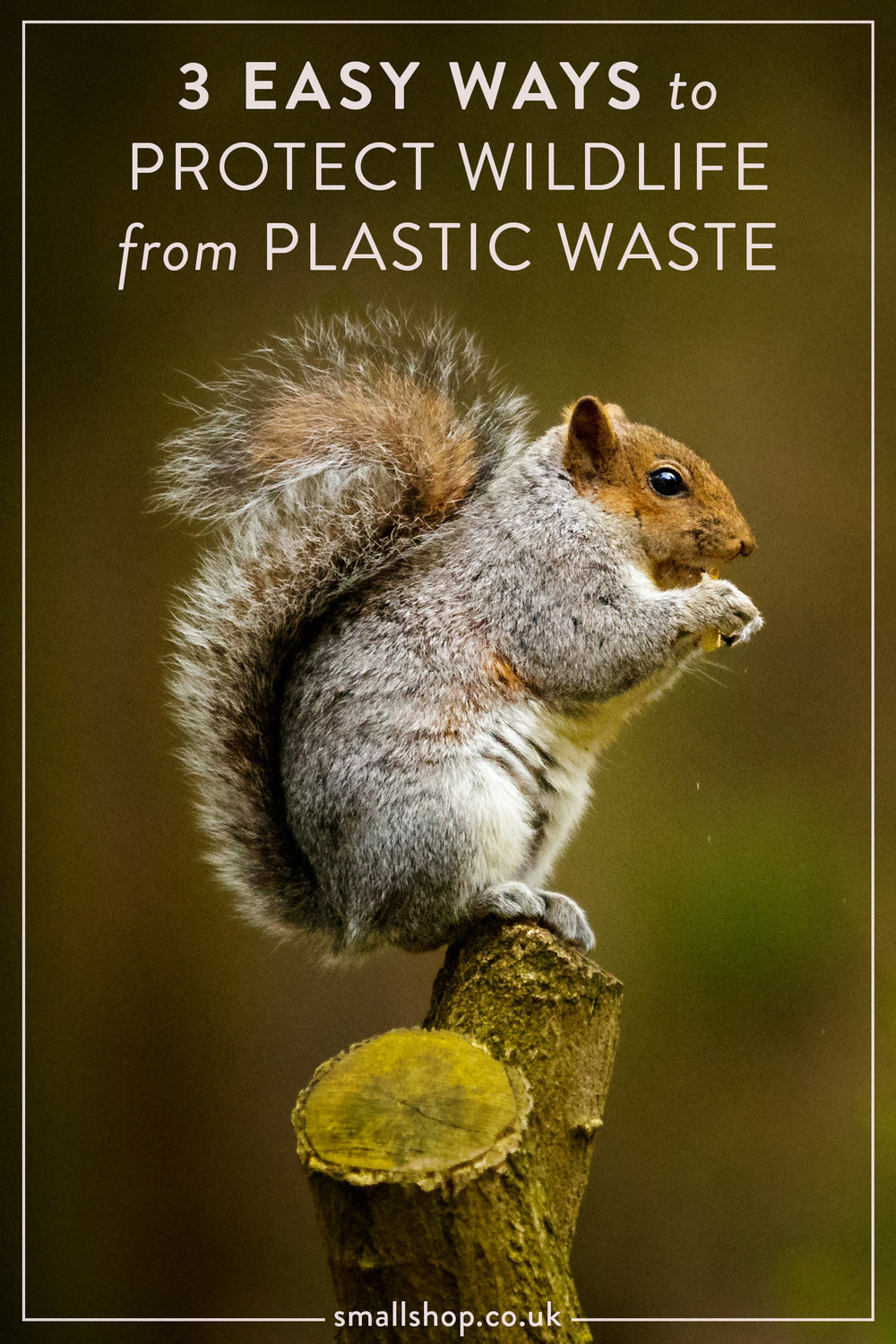 3 Easy Ways to Protect Wildlife from Plastic Waste