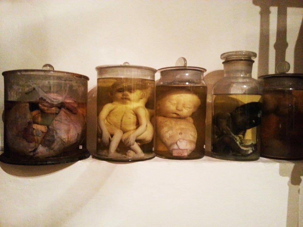 Exhibit at Museo dell'Arte Sanitaria, Rome [ source ]