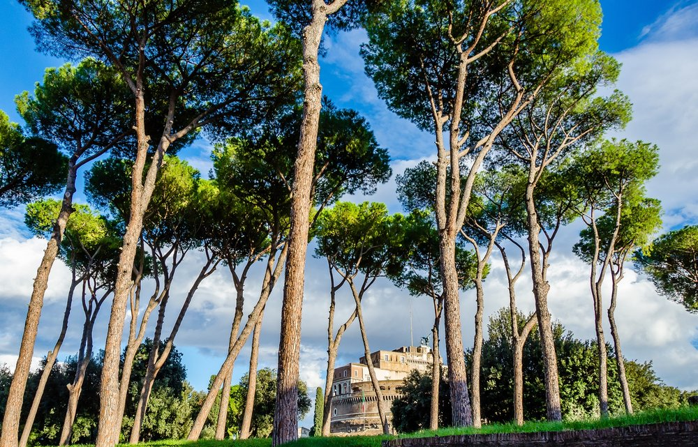 Roman Pines and Castel Sant'Angelo, © Neil Cornwall