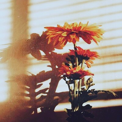 Golden hour. . . . . . . #millionmiles #newmusic #singersongwriter #blues #soul #inspiration #blinds #interiordesign #sun #goldenhour #shade #shadow #sunset #home #friends #picoftheday #bestoftheday #love #flowers