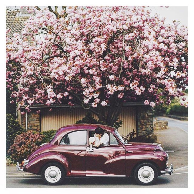 Colour block . . . . . #millionmiles #newmusic #flowers #colours #summer #cars #purple #pink #wall #picoftheday #bestoftheday #inspiration #road #roadtrip #magichour #sunshine #summertime