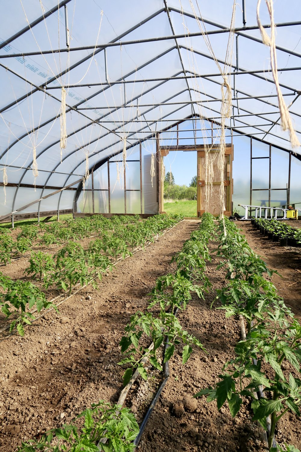 lake superior kitchen, duluth food, organic farming