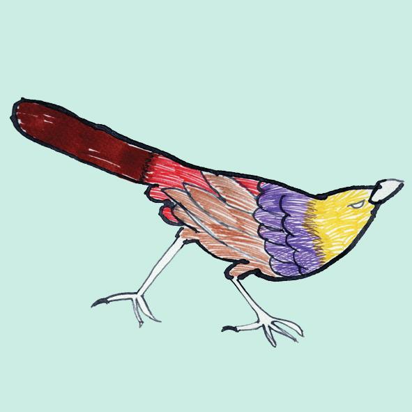 YOT_bird.jpg