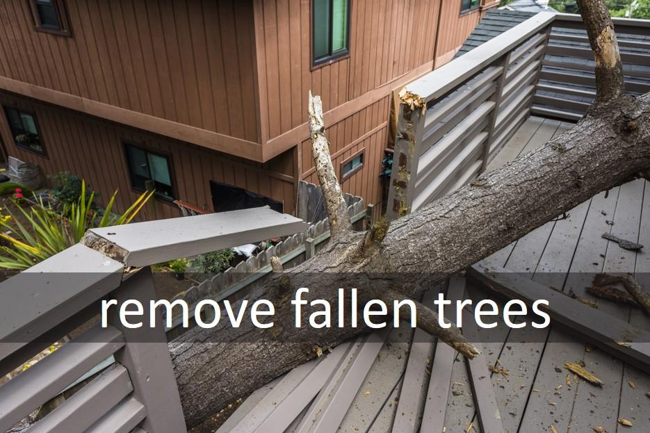 Remove fallen trees