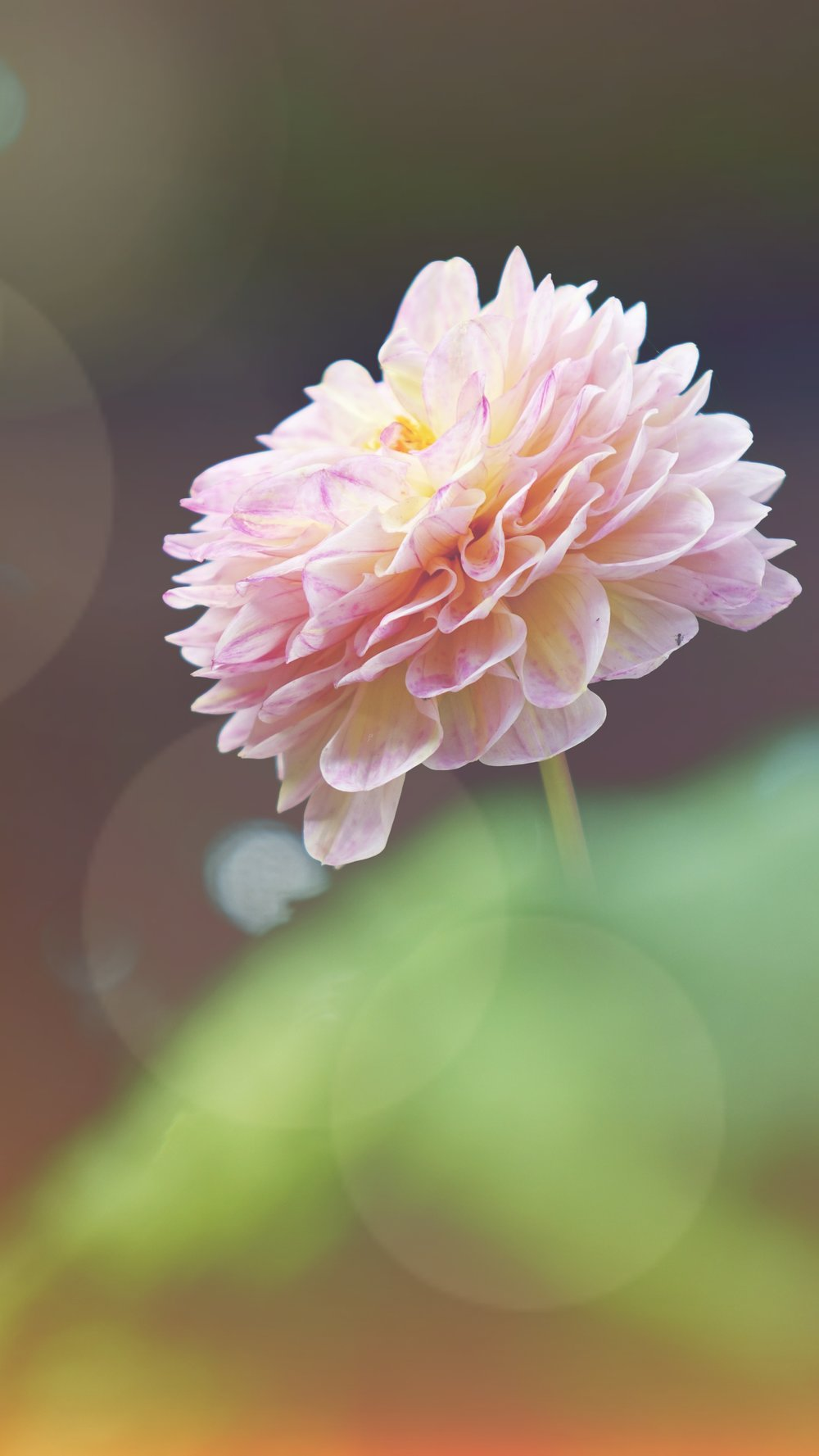 Oh pretty flower....