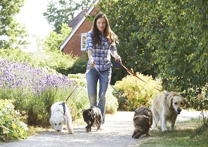 dog_walking.jpg