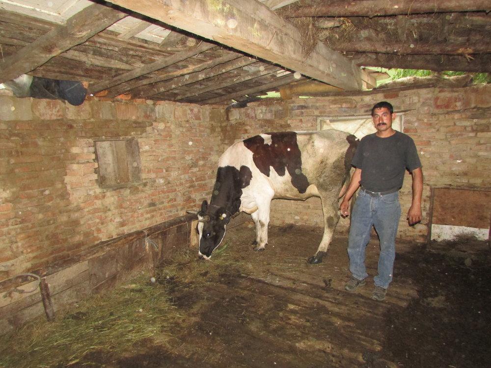 tatal si vaca cumparata in grajdul familiei.jpg