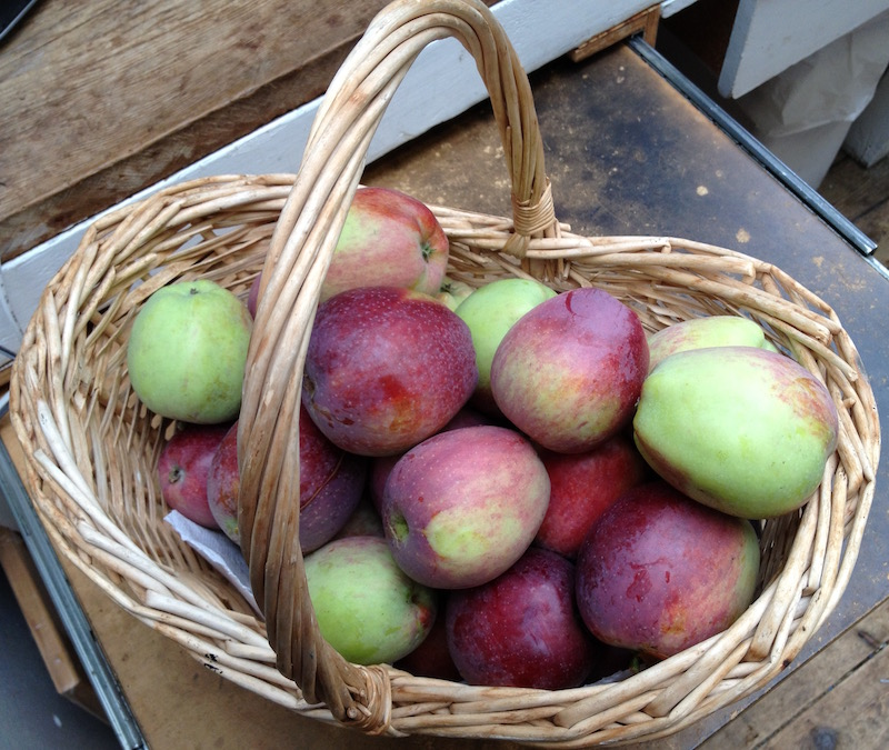 Harvest from our Dwarf Apple Tree.