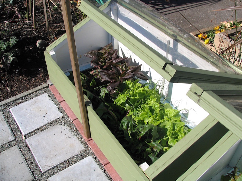 Solar Cold Frame Produces in Winter