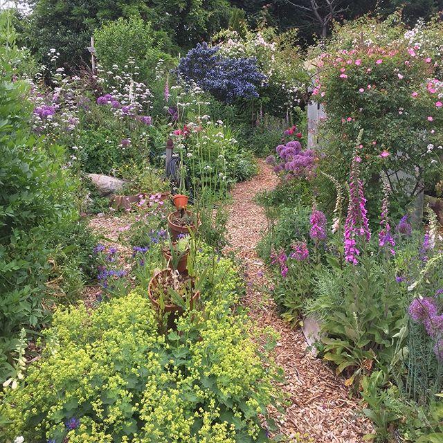 #June #secretgarden #grownincompost #alltheblooms #bloomlevelup #rainbow #gardenmagic #gardenlove #allthecolours #gardenpath #paintme #sigh #visitorswelcome #visitvancouver #vancouvergardens 🌺🍓