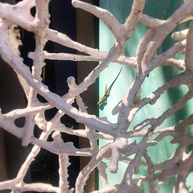 Repost @justingaffrey_gallery Tiny little visitor enjoying the sculpture garden today at the gallery! If you happen to be riding your bike along 30A through Blue Mt. Beach, stop in and see all of Justin's newest creations Monday through Saturday, from 10 to 6! . . . #art #artfair #international #applicationsopen #artgalleries #galleries #opencall #nashville #tennessee #contemporary #tradeshow #production #curator #nyc #lifestyle #decor #highart #painting #sculpture #installation #performance #artcollector #collections #collectors #luxury #design #artnashville