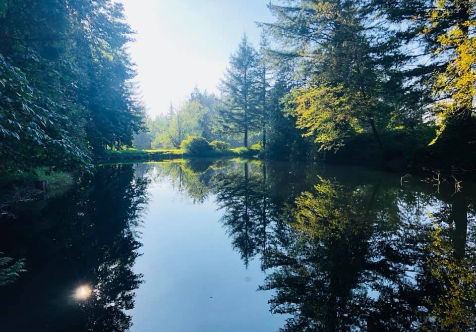 Cedar springs.jpg