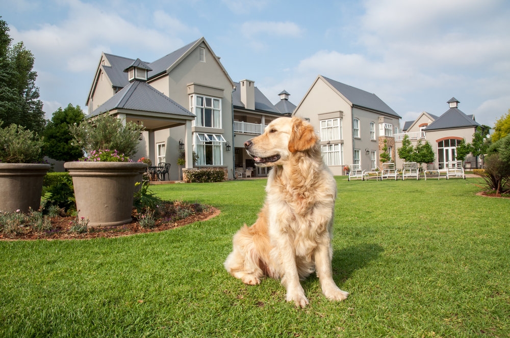 5 Ideas for Pet-Friendly Landscaping in Derry, PA