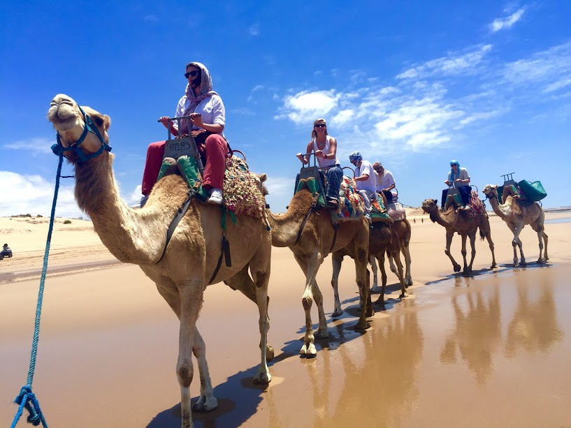 Dromedary ride along Essaouira Beach.