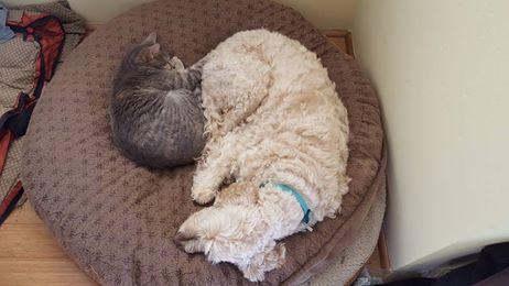 Aspen and Stella.jpg