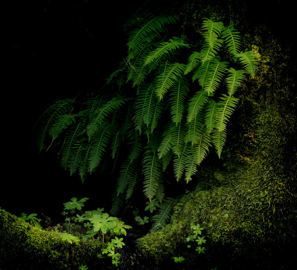 A nook of ferns and moss