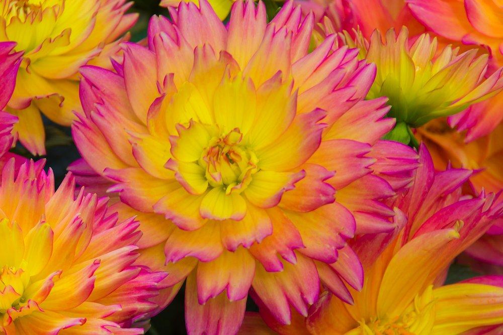 flower-1682257_1920.jpg