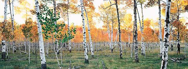 Autumns Palette Aspen Joy