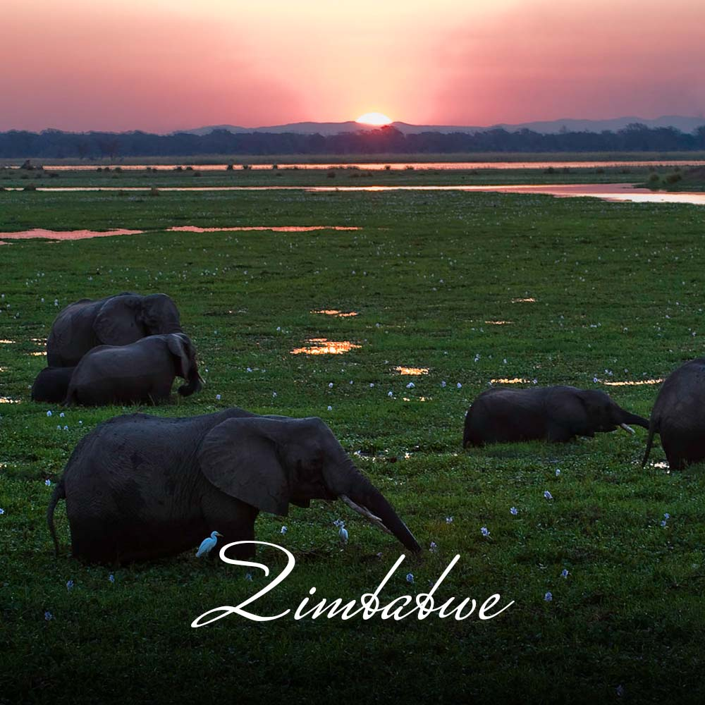 Zimbabwe is home to warm people and wildlife galore, not to mention the spectacular Victoria Falls – one of the seven wonders of the world. Hwange National Park boasts some of Africa's biggest concentrations of elephant as well as the Big 5. The mighty Zambezi River offers excellent game viewing, abundant birdlife and fishing opportunities.