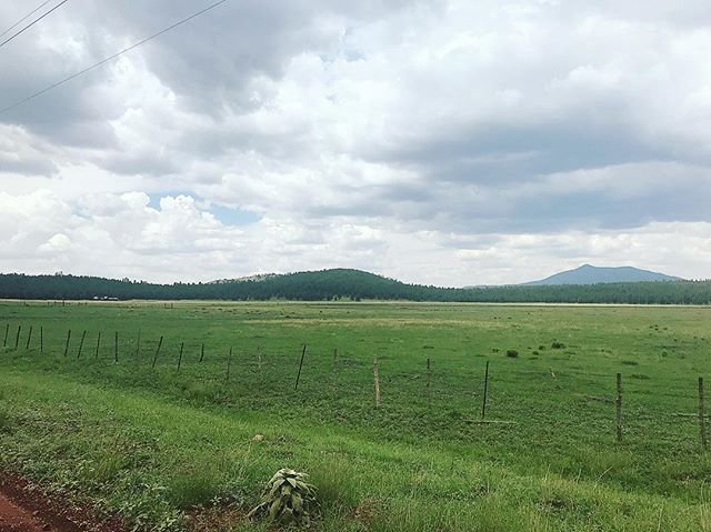 Green looks good on Northern Arizona. The beautiful site of Royal Oaks Ranch. . . . #royaloaksranch #horseranch #andalusian #spanishhorse #arizona #parksaz #horserunning #horsesforsale #andalusianhorse #anceeregistered #horseranch