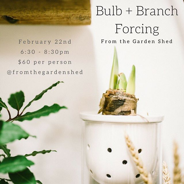 Bulb + Branch Forcing workshop with @fromthegardenshed is coming up on February 22nd at Gather ✨ An evening surrounded by spring blooms where you will learn how to force bulbs and branches in your home! Spring is coming 🙌🏻 to reserve your spot head to the link in @fromthegardenshed bio. See you there! #spring #whistlerworkshop #indoorplants