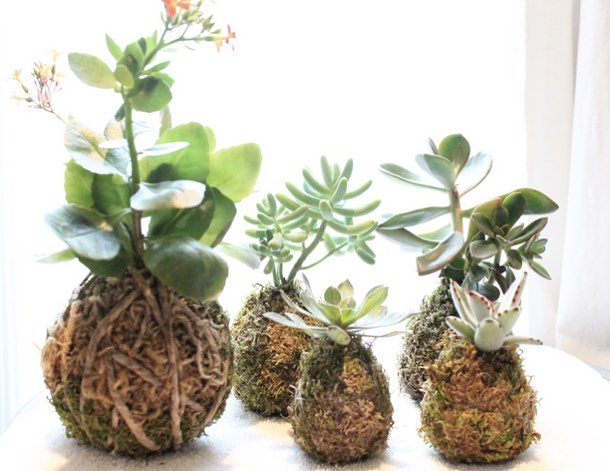 CALLING ALL SUCCULENT LOVERS! @afox.intheflowers will be hosting a Kokedama Minis class at Gather on the 5th of April! Learn the ancient art of binding plants in soil and moss, the perfect way to welcome spring into your home. Head to the link in our bio for more information and to register! See you there! #collaboration #gatherworkshop #springiscoming