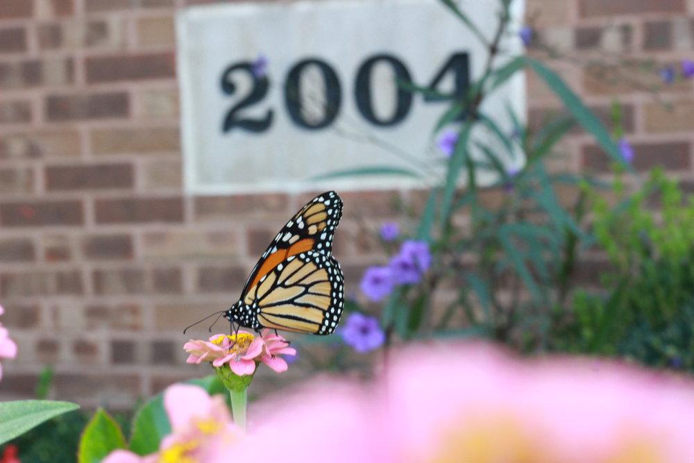 Butterfly28.JPG