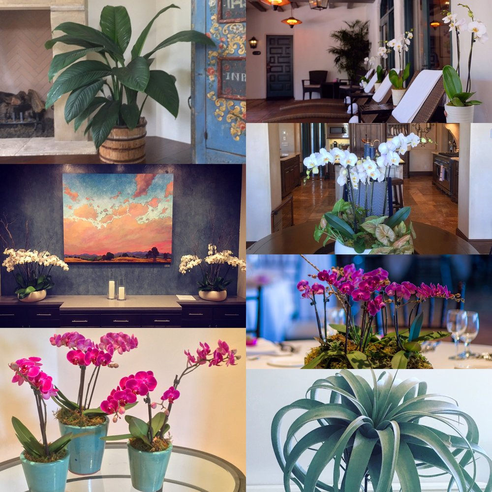 Wonderful Interior Plant Service Awesome Ideas
