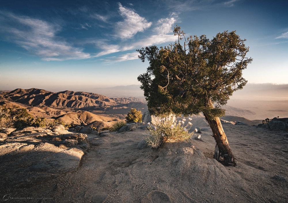 joshua_tree_national_park.jpg