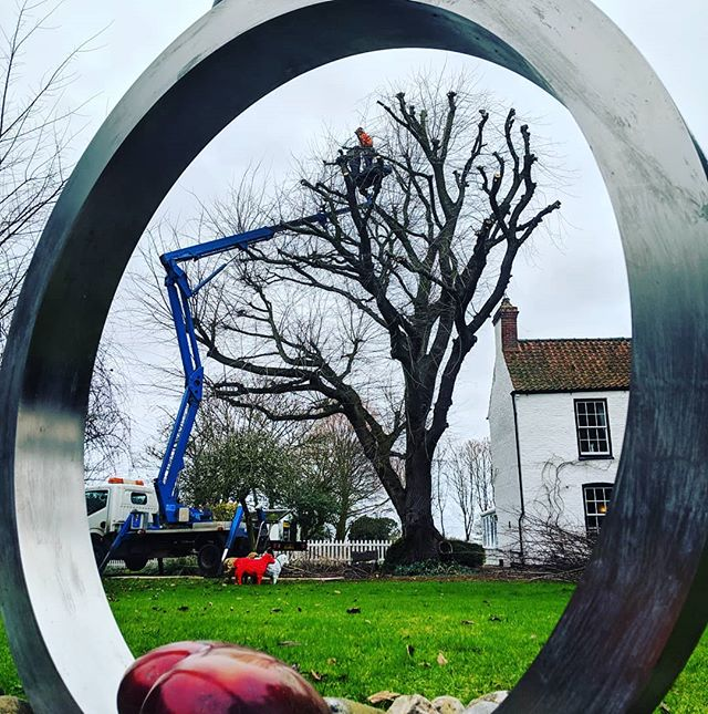 Tree circle 😀 . . . #circleoflife #art #sculpture #mewp #pollard #pollarding #reduction #treereduction #treecutting #treemanagement #arbwork #arboristsofinstagram #arb #arblife #treework #treelife #arboriculture #arborist #forestry #treeclimbing #treeworker #treeclimber
