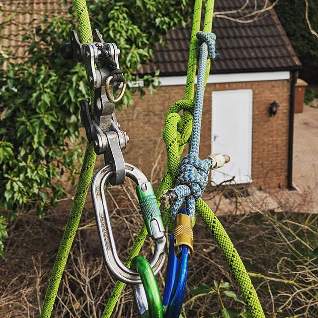 The new and the old. Bulldog Bone on the main anchor in SRT and employing the prusik on the other end of my line in DRT as a secondary anchor. . . . . #srt #drt #bulldogbone #prusik #dmmwales #dmm #isc #bowline #ropes #knots #arbwork #arboristsofinstagram #arb #arblife #treework #treelife #arboriculture #arborist #forestry #treeclimbing #treeworker #treeclimber