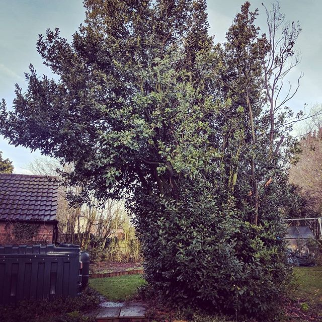 It's nice to make a big difference to a garden in such a short space of time. Bay tree brought down into a manageable height and two limbs off the horse chestnut. . . . . #thatsmadeadifference #wow #quickanddirty #bosh #arbwork #arboristsofinstagram #arb #arblife #treework #treelife #arboriculture #arborist #forestry #treeclimbing #treeworker #treeclimber