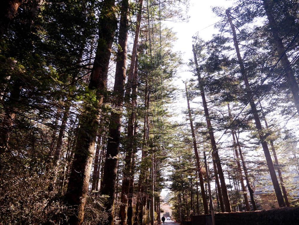 woods_karuizawa