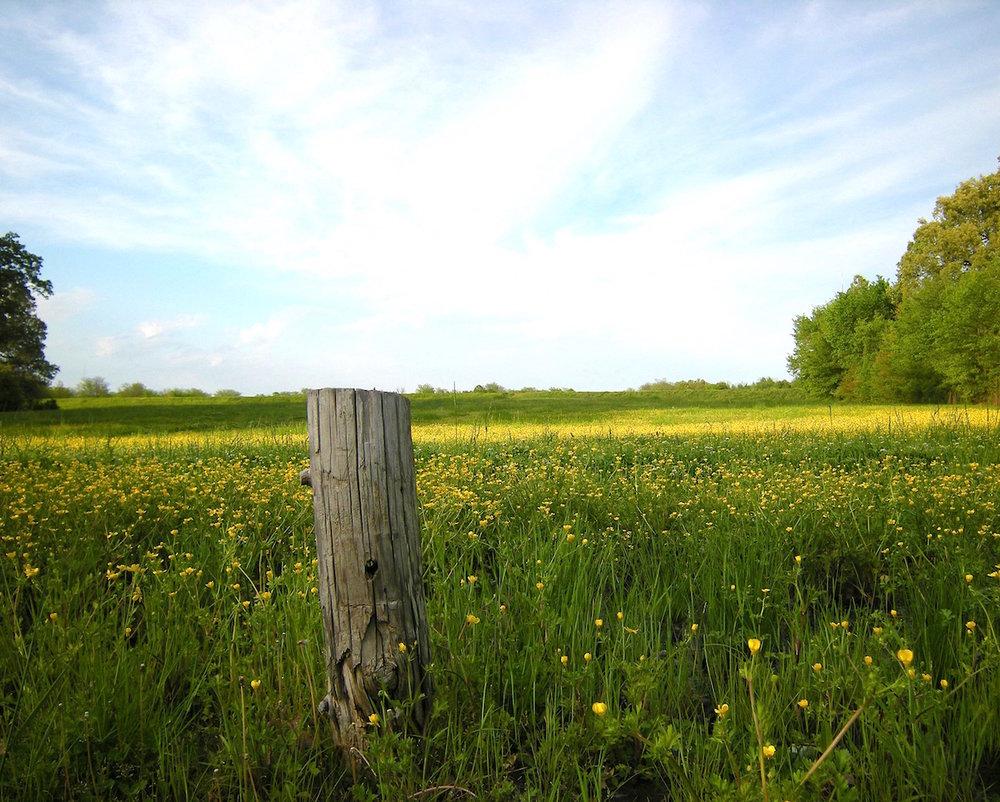 Shelby Farm Wildflowers  by Eli Watts