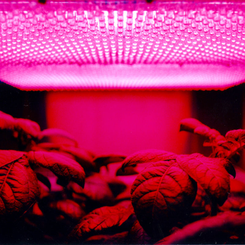 In Space Farming   It's one thing to land humans on Mars. It's another to create a sustained presence.  When humanity has a permanent extraterrestrial settlement that isn't in Low Earth Orbit, one of the most valuable innovations we will need is a way to grow or manufacture food with good nutrition.  This may mean learning to grow vegetables in micro-gravity or by creating large scale terrariums with material shipped from earth, or it may mean getting creative. Is it possible to grow potatoes in Martian soil? What would an organisation be willing to pay if it became possible to create humankind's first extraterrestrial agricultural industry, where food would be fresh and no longer needs to be lifted into LEO at massive expense, before a long interplanetary trip?