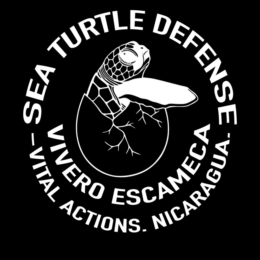 Direct action saves lives. - Our sea turtle defenders have saved more than 60,000 sea turtle eggs from the illegal food trade!