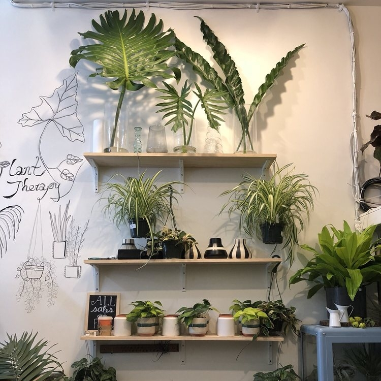 plant therapy.jpg
