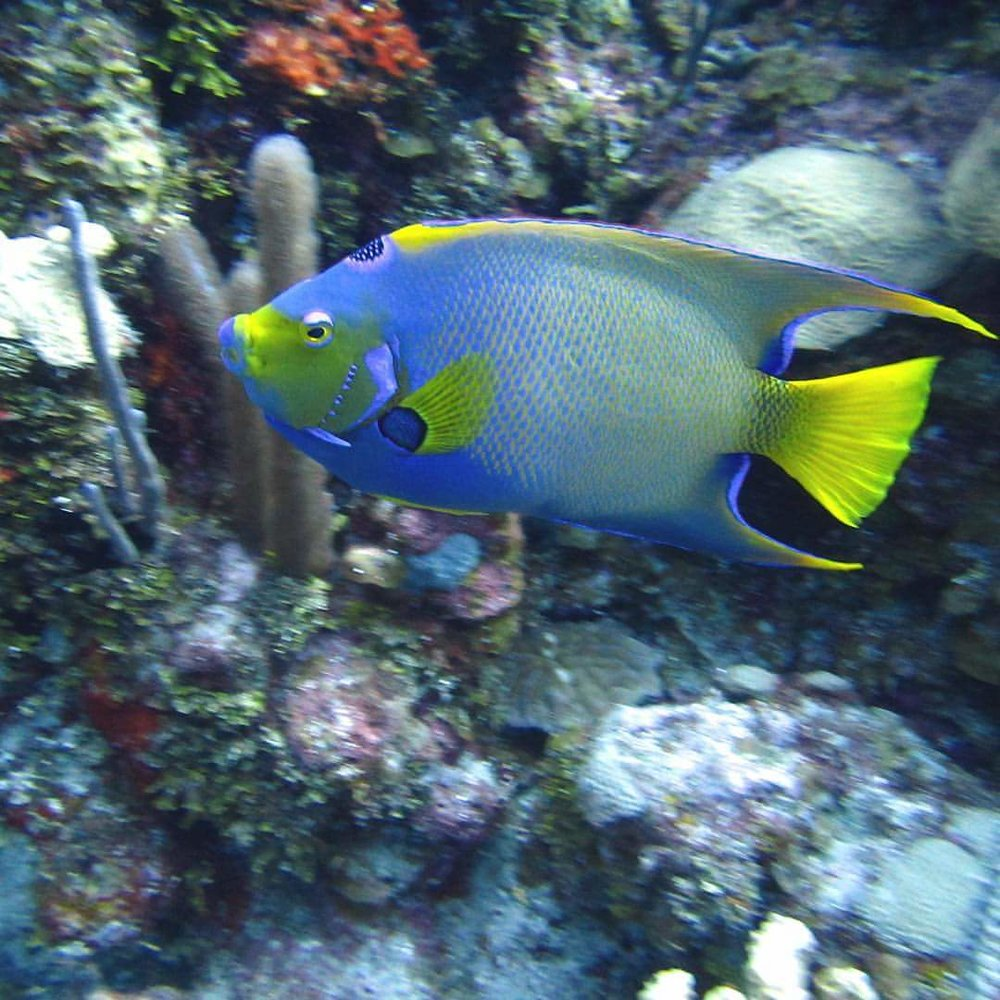 Coral reef and fishes