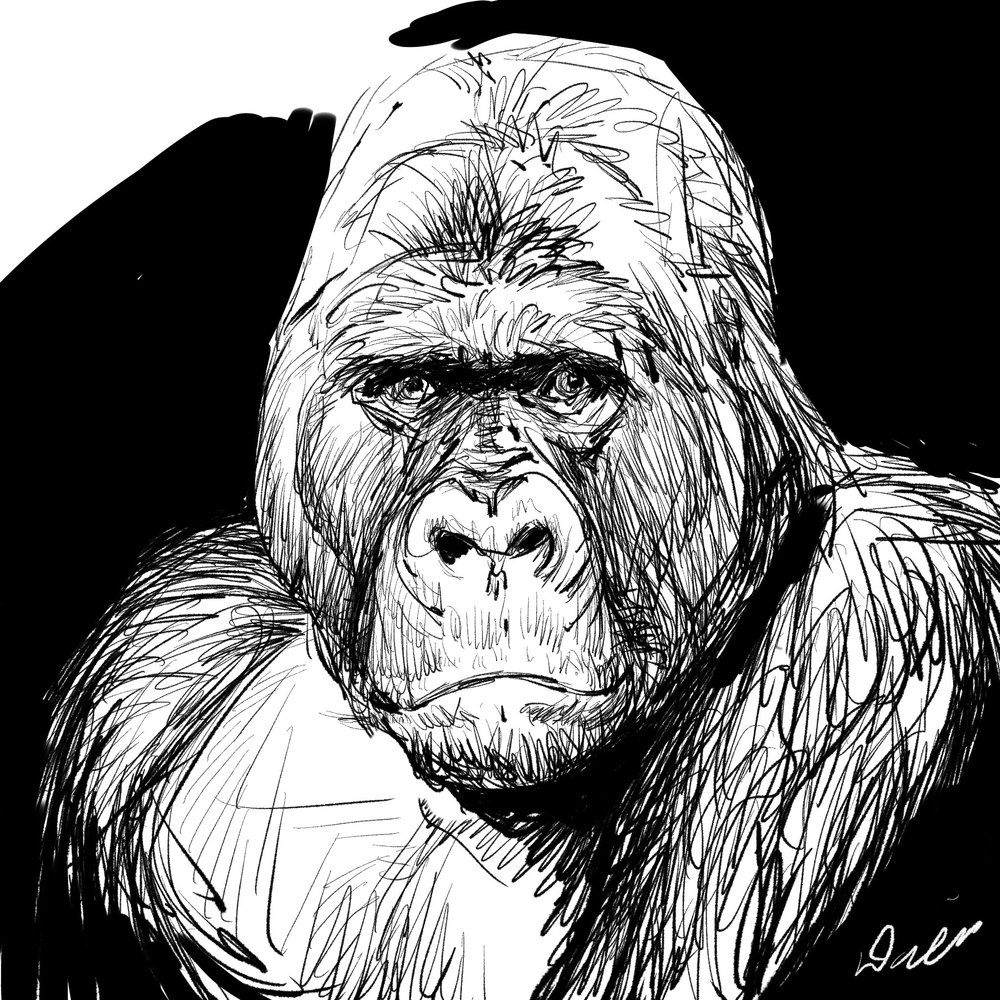 Gorillaportrait .jpg