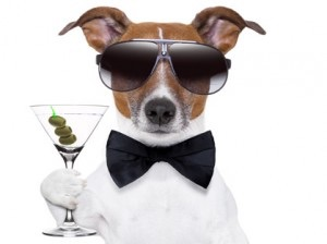 cocktail-dog.jpg