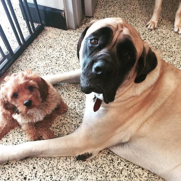 Dogtown Instagram: @dogtownmiami