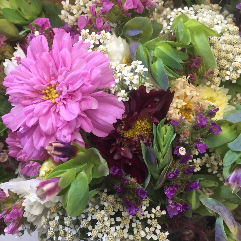 cosmos_cerinthe_bouquet.JPG