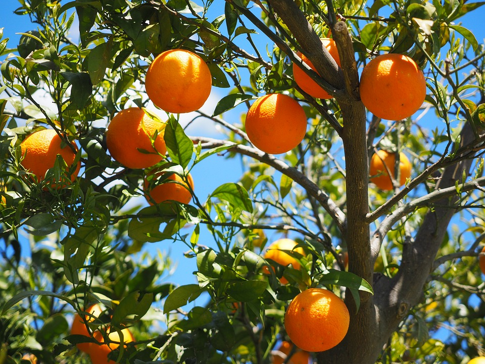 oranges-1117628_960_720.jpg