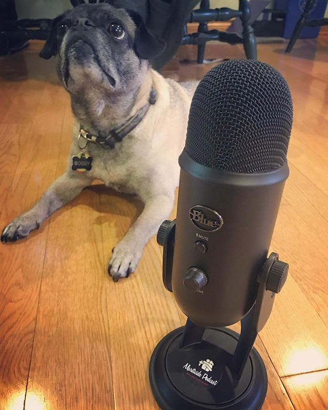 NEW 🎤 ! Since our original mic broke it was the perfect time to upgrade to the 🎙#blueyeti . High quality pug noises coming to a podcast app near you!@bluemicrophones #mariticidepodcast