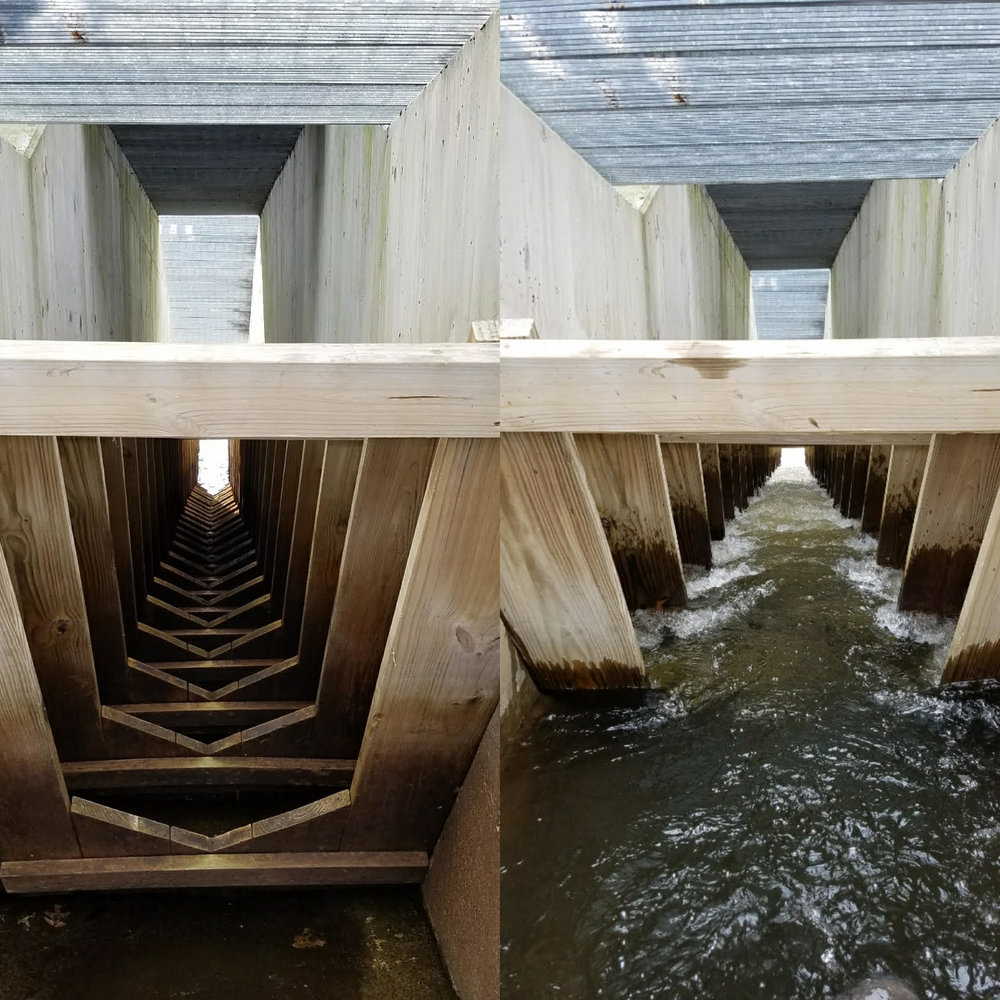 A view of the fish ladder from the inside. The incremental steps allow fish to travel through what would otherwise be too steep an incline. Photo Credit: David Mussina