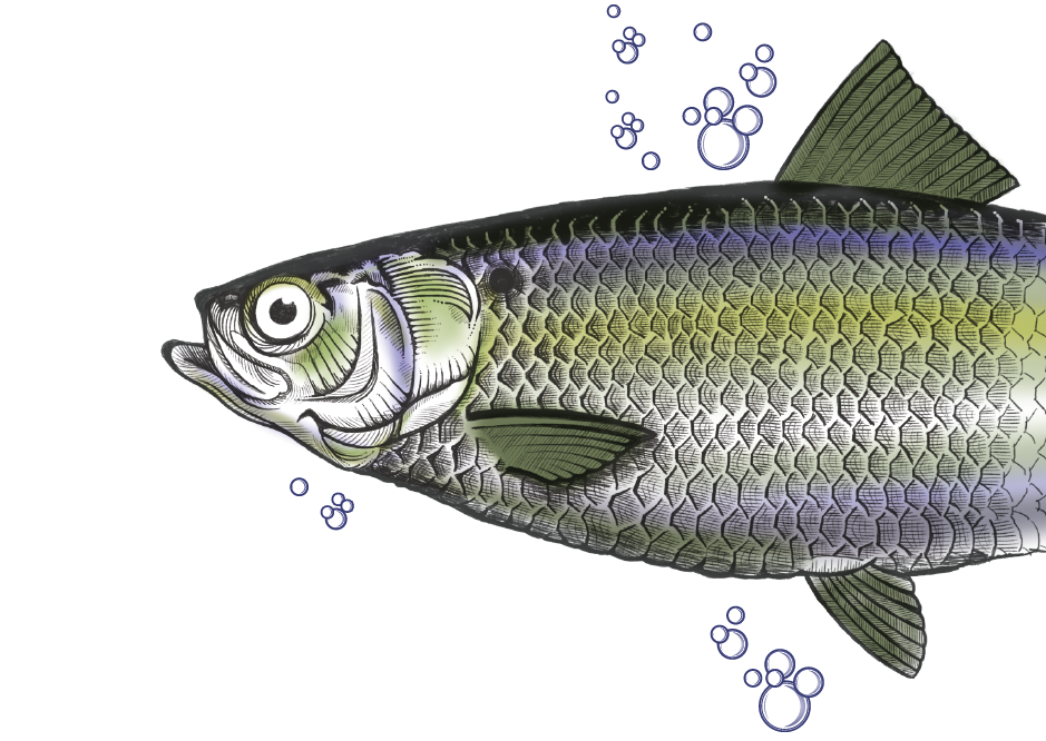 fish graphic-01.png