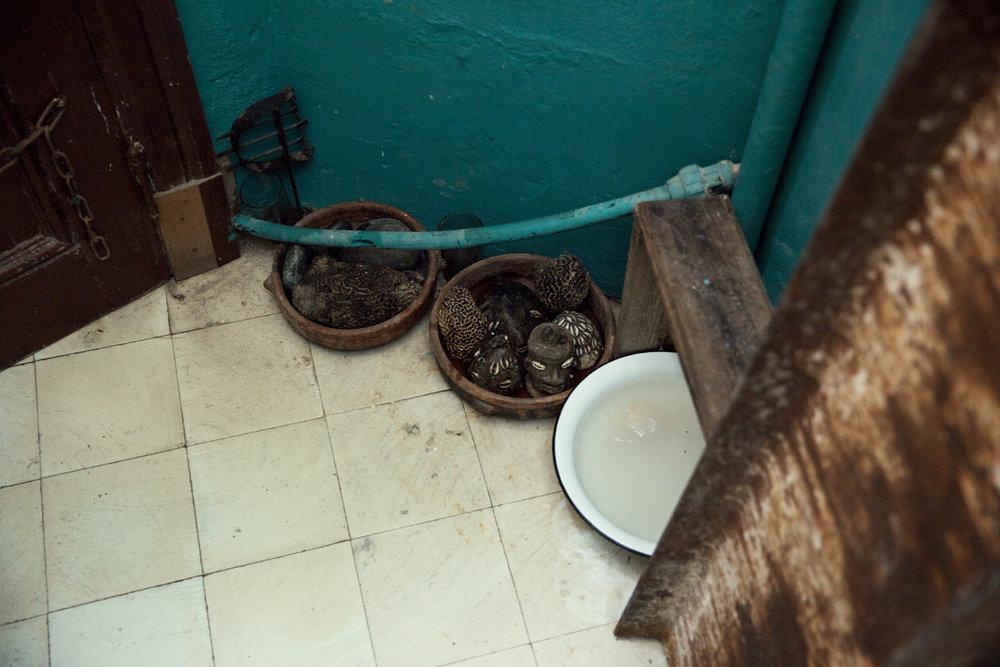 Armando's House-Photo Bex Wade-14.jpg