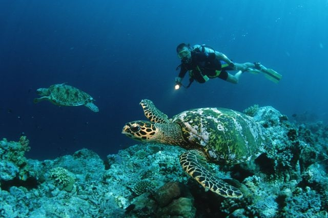 Sea%20Turtles%20Swimming[1].jpg
